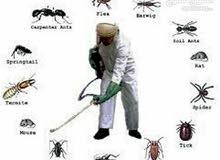 مكافحة الحشرات من المنازل