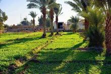 أراضي زراعيه للبيع من 1-70دونم على طريق السنيه السياحي قرب الفرات