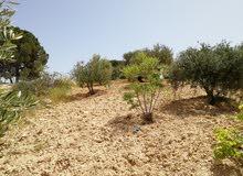 قطعة ارض للبيع دونم ونصف زي