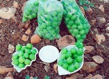 كرز أخضر طازج و بعل
