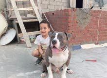 كلب بولى زيوس ابن جودزلا