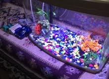 حوض سمك جديد لون ذهبي مع ميز ألمنيوم صاجي