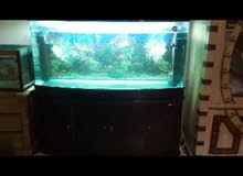 حوض أسماك  متر ونص . ماركة(sunsun)