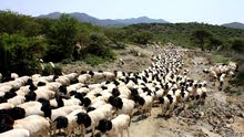 نوفر لكم خيرات السودان من المواد الزراعية والاغنام