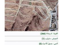 ارض في ام الرمانة شفا بدران ( الاردن )