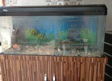 حوض أسماك كبير مع الدولاب والفلتر