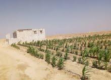 اراضي و مزارع للبيع