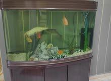 اكواريوم تانكي حوض خزان زجاج مع اسماك زينة للمنزل Aquarium