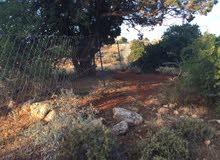 قطعةً ارض لبناء استراحه