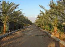 ارض زراعيه في منطقه وادي الملاك