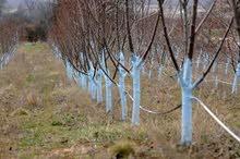 فني زراعة اشجار الفواكه بجميع انواعها