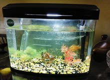 Fish aquarium with 3 fishes and accessories almost new (حوض سمك)