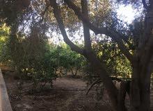 مزرعة مع بيت ريفي في الشونه الجنوبيه