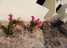 استوديو للايجار بمدبنة محمد بن زايد حوض 27اول ساكن مدخل خاص