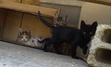 قطة بلدية