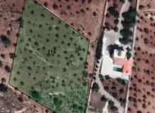 مزرعة مشجرة في أروع مناطق سوف بجانب فندق غصن الزيتون
