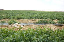 قطعتين أرض زراعية تربة خصبة مسجلة عقد خالص الثمن (عقد حكومى خالص) – النوبارية الجديدة - البحيرة