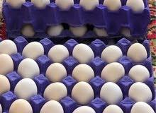 بيض دجاج عرب سعر طبقه 15 الف مكاني الاصمعي الجديد