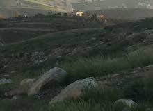 ارض في شفا بدران المقرن مرج الفرس