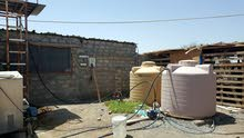 مشروع تربية الدواجن للتنازل او الايجار للجادبن فقط