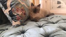 قطه العمر 4 شهور