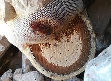 للبيع عسل برم بوطويق إنتاج جبال الداخليه الغرشه 125 ريال