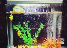 حوض سمك 35cm بحالة ممتازة للبيع