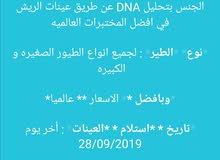 فحص طيور عن طريق  DNA