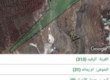 أرض مزروعه زتون في منطقه رفيد اربد مساحه 90 دنم للبيع بسعر مغري