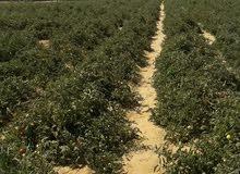 مزرعه 14 فدان للبيع