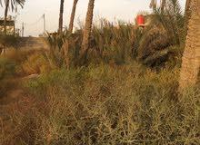 ابو خصيب عويسان  قطعة ارض واجهة تسعة متر نزال 57 نهايته نهر