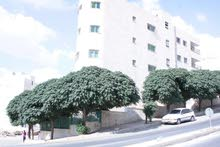 apartment is available for sale - Al Hashmi Al Shamali