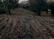قطعه ارض اربعه دنم الا 70 متر في منطقة وادي سوف