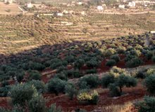 مزرعه مميزه للبيع من أراضي السلط