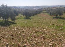 أرض للبيع رحاب