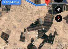 ارض قريب من التنظيم كوشان مستقل في ام الجمال