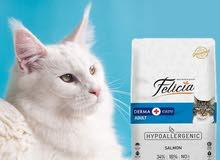 اكل القطط فيليسيا ديرما