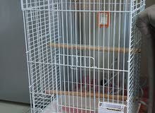 BIG CAGE AND MOBILE STAND AVAILABLE AT VERY LOW PRICE (For Big Parrots like Casco)