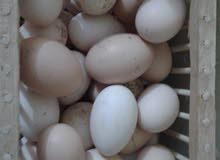 بيض دجاج
