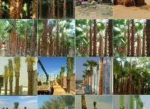تنسيق الحدائق وتصميم الديكورات وتصميم شبكات الري
