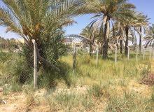 قطعة ارض في كربلاء حي العباس يم تيل 60