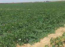 اكثر عروض مميزة لسعرالفدان مع الريف المصري اراضي (مسجله---ومقننة)