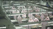 مطلوب عمال لمصنع لحوم