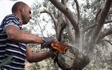 تقطيع وأزالة وتقليم الاشجار وتنسيق الحدائق