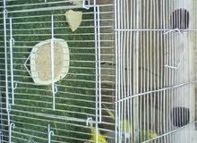 3 بادجي محلي منتج مع القفص و البيوت