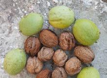 Fresh green walnuts