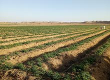 بالـتـقـســيــــــــط وبدون فوائد للبيع قطعة ارض خصبة صالحة لجميع الزراعات