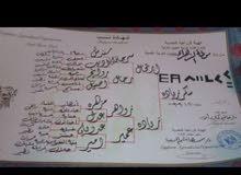حصان عربي انتاج محطه الزهراء اداب وجمال