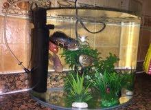 للبيع حوض سمك مع اسماك بحالة ممتازة