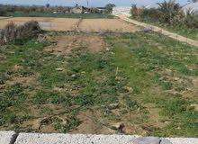 ارض 1760 متر بدير البلح بمنطقة مرتفعة